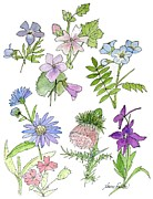 Nature Study Painting Prints - Wildflower Natural History Study Print by Laurie Rohner