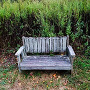 Benches Drawings - Wildflower Solace by Julia Gatti