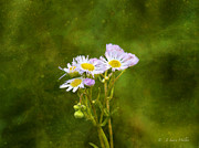 Wildflower Swaying In The Wind Print by J Larry Walker