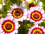 Gerber Daisy Art - Wildflowerd Wide 1 by Amy Vangsgard