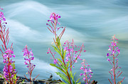 Fire Weed Prints - Wildflowers along glacial stream Print by Oscar Gutierrez