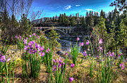 Spokane Falls Prints - Wildflowers and Old Bridge Print by Derek Haller