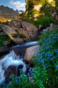 Mike Berenson Framed Prints - Wildflowers And Waterfalls In The Indian Peaks Framed Print by Mike Berenson