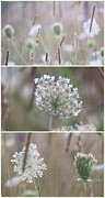 Impressionism Acrylic Prints Photos - Wildflowers collage 1 by France Laliberte