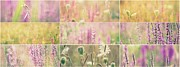 Impressionism Acrylic Prints Photos - Wildflowers collage 10 by France Laliberte