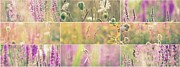 Impressionism Acrylic Prints Photos - Wildflowers collage 11 by France Laliberte