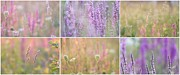 Impressionism Acrylic Prints Photos - Wildflowers collage 13 by France Laliberte
