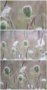 Impressionism Acrylic Prints Photos - Wildflowers collage 2 by France Laliberte