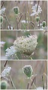 Impressionism Acrylic Prints Photos - Wildflowers collage 3 by France Laliberte