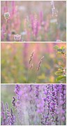 Impressionism Acrylic Prints Photos - Wildflowers collage 4 by France Laliberte