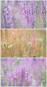 Impressionism Acrylic Prints Photos - Wildflowers collage 5 by France Laliberte