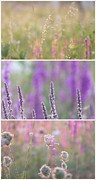 Impressionism Acrylic Prints Photos - Wildflowers collage 6 by France Laliberte