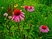 Indiana Dunes Prints - Wildflowers in Indiana Dunes National Lakeshore Print by Ruth Hager