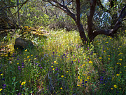 Escapees Framed Prints - Wildflowers in Sierra Nevada Foothills in Park Sierra-CA Framed Print by Ruth Hager
