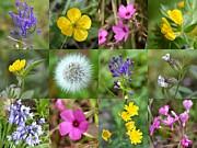 John Tidball  - Wildflowers Mosaic