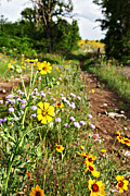 Pastureland Posters - Wildflowers of Oklahoma Poster by Charrie Shockey