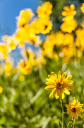 Yellow Flowers Posters - Wildflowers Standing Out Abstract Poster by Chad Dutson