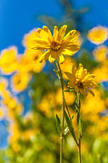 Wyoming Photo Prints - Wildflowers Standing Out Print by Chad Dutson