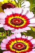 Gerber Daisy Art - Wildflowers Tall by Amy Vangsgard