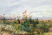 Flower Gardens Painting Posters - Wildflowers with a View of Dublin Dunleary Poster by A Nicholl