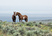Green Bay Prints - Wildhorses - South Steens No. 2 Print by Belinda Greb