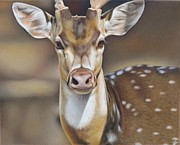 Closeup Pastels Prints - WildLife Print by Eric Pouillet