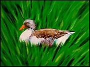 Jim Harris - Wildwood Park Goose