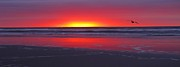 Sea Salt Framed Prints - Wildwood Sunrise Dreaming Framed Print by David Dehner