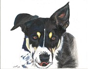 Mutt Drawings - Will by Laurie Scott