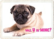 Pug Valentine Framed Prints - Will U be mine? Framed Print by Edward Fielding