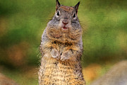 Squirrel Prints - Will Work For Peanuts Print by Donna Kennedy