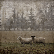 Duo Photos - Willamette Valley Oregon by Carol Leigh