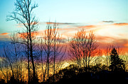 Bare Trees Metal Prints - Willamette Valley Sunset Splendor Metal Print by Gwyn Newcombe