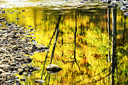 Trout Prints - Williams River Autumn Reflection Print by Thomas R Fletcher
