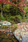 Williams River Scenic Backway Posters - Williams River Autumn Rock Poster by Thomas R Fletcher