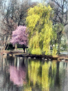 Weeping Willow Posters - Willow and Cherry by Lake Poster by Susan Savad