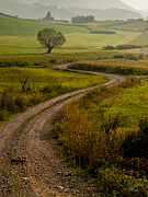 Gravel Road Photo Metal Prints - Willow Metal Print by Davorin Mance