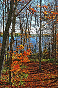 Willow Lake Metal Prints - Willow Lake Metal Print by Bill Morgenstern