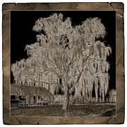 Willow Tree Prints - Willow Ranch Print by John Stephens