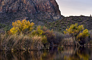 Red Mountain Framed Prints - Willow Reflections Framed Print by Dave Dilli