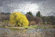 Willow Lake Digital Art Posters - Willow tree Poster by Irina Hays