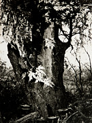 Jeanette K - Willow Tree