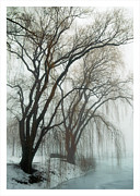 Elvira Butler - Willows in fog