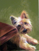 Brown Dogs Pastels - Willy the Australian Terrier by Lenore Gaudet