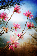 Beauty In Nature Mixed Media Prints - Wind In The Magnolia Tree Print by Andee Photography