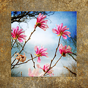 Horticulture Mixed Media Posters - Wind In The Magnolia Tree Square Poster by Andee Photography