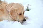 Snow Photos - Wind snack by Mila Andretich
