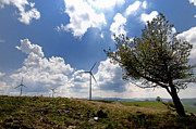 Wind Turbines Framed Prints - Wind turbine and tilted tree isolated in the countryside. Framed Print by Bernard Jaubert