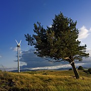 Wind Turbines Framed Prints - Wind turbine and tree on the plateau of  cezallier. Auvergne. France. Framed Print by Bernard Jaubert