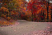 Indiana Autumn Posters - Winding Road Poster by Caitlyn Hymer